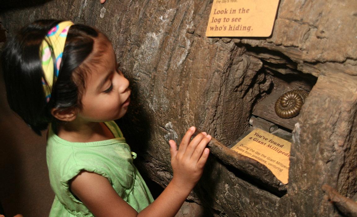 Madagascar Exhibit, NY